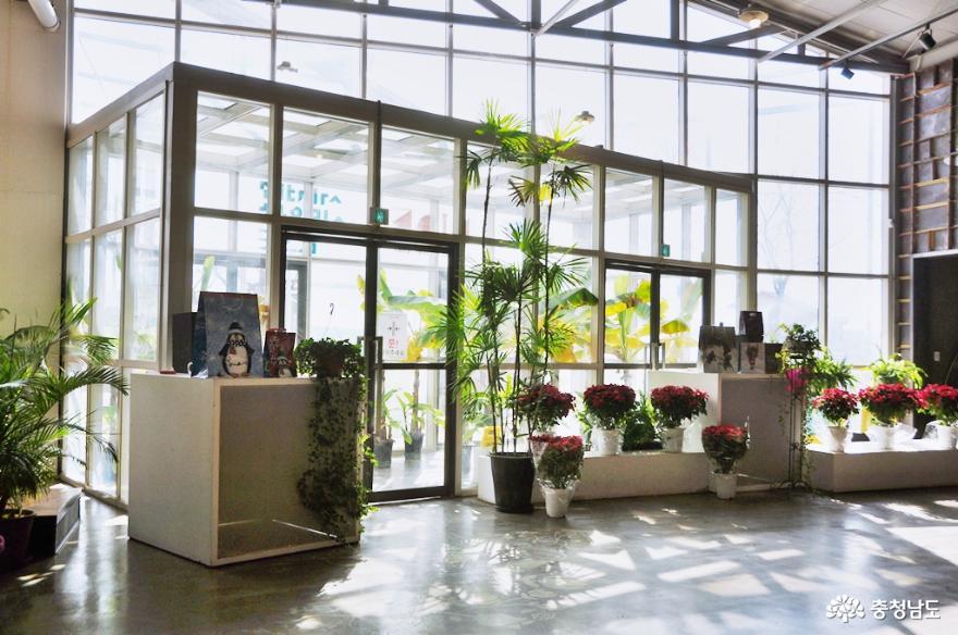 아산 세계꽃식물원에서 다양한 꽃들과 성탄절 분위기를 미리 즐기고 오다