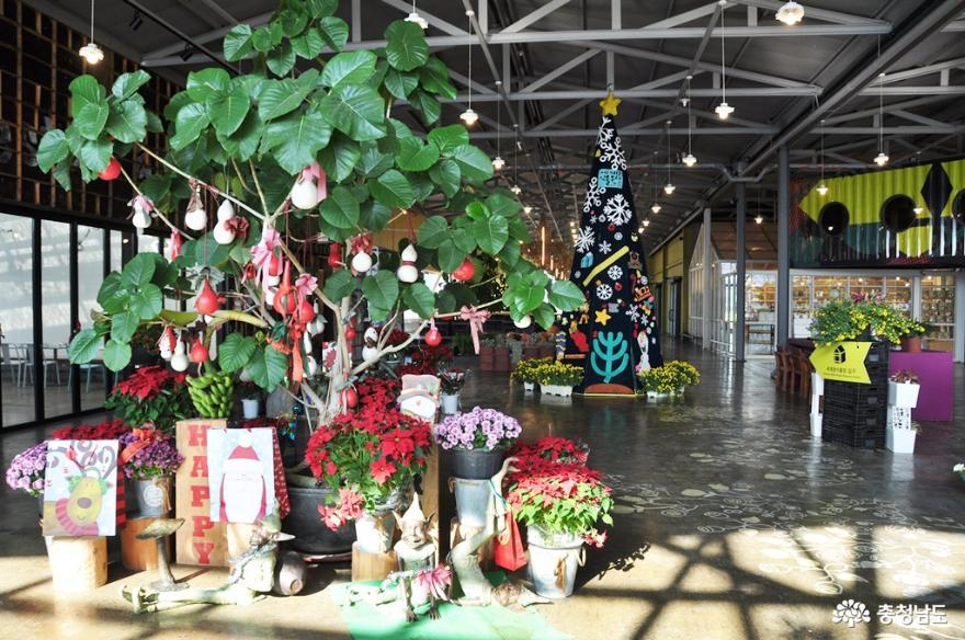 아산 세계꽃식물원에서 다양한 꽃들과 성탄절 분위기를 미리 즐기고 오다 2