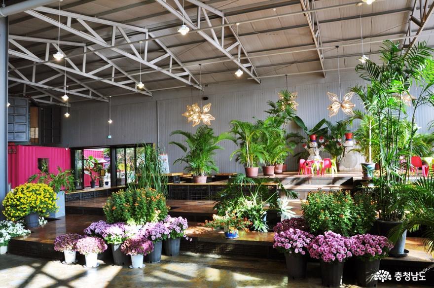 아산 세계꽃식물원에서 다양한 꽃들과 성탄절 분위기를 미리 즐기고 오다 3