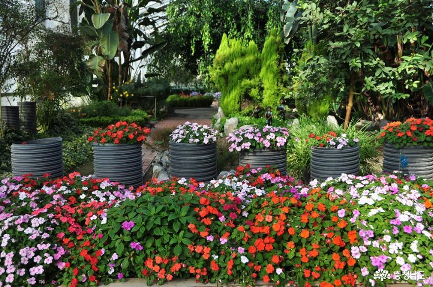 아산 세계꽃식물원에서 다양한 꽃들과 성탄절 분위기를 미리 즐기고 오다 4