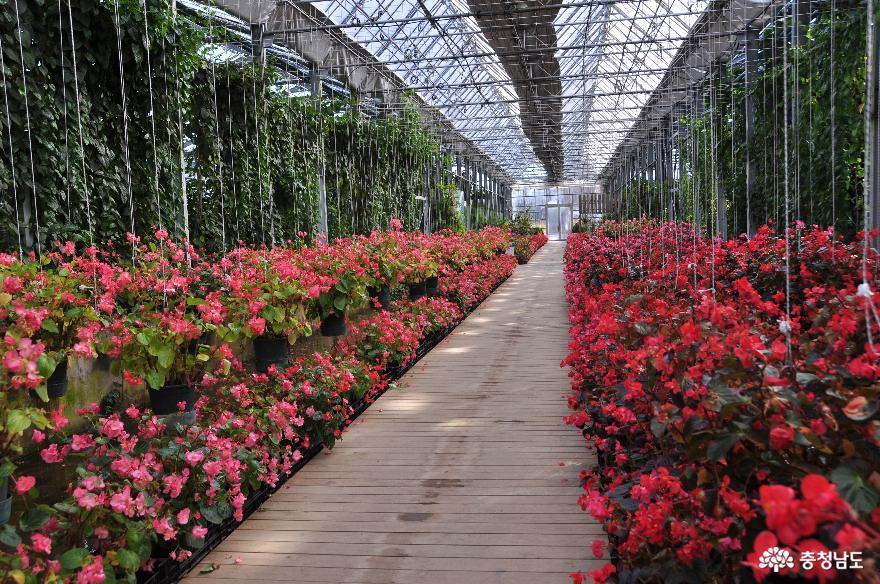 아산 세계꽃식물원에서 다양한 꽃들과 성탄절 분위기를 미리 즐기고 오다 5
