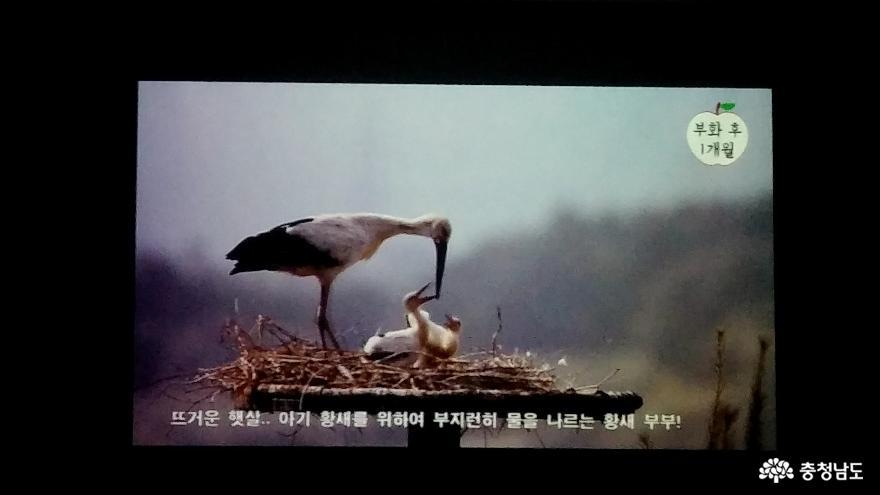 자연과 인간이 공존하는 황새들의 천국 <예산 황새공원> 11