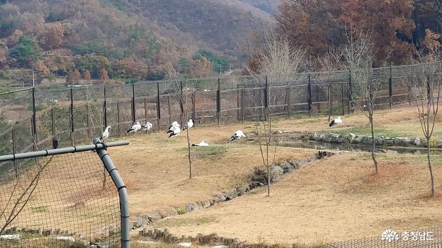 자연과 인간이 공존하는 황새들의 천국 <예산 황새공원> 20