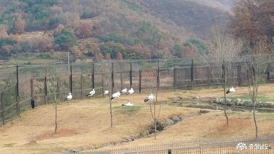 자연과 인간이 공존하는 황새들의 천국 <예산 황새공원> 21