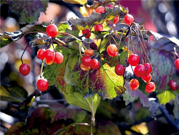 금강에서 만난 사랑의 열매
