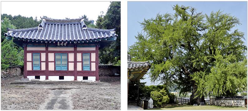 박약재·홍산 은행나무 문화재 등극