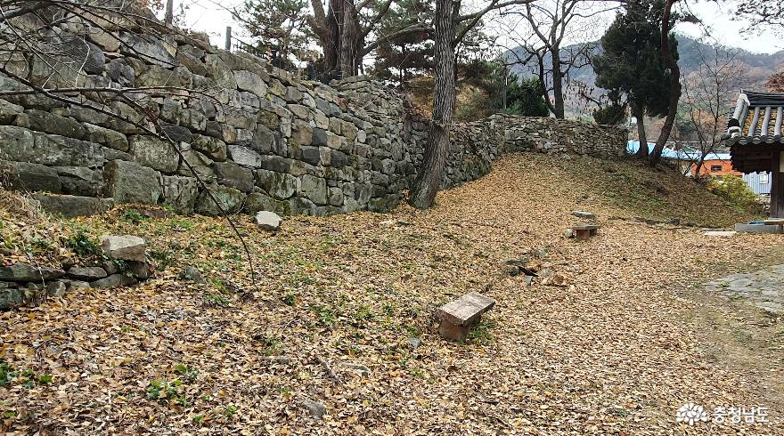 맹사성 고택의 담장아래로 650년된 쌍행수에서 떨어진 은행나무잎이 쌓여있다.