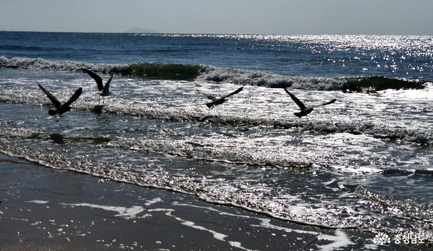 알싸한 겨울바다, 추억과 낭만의 '대천해수욕장'