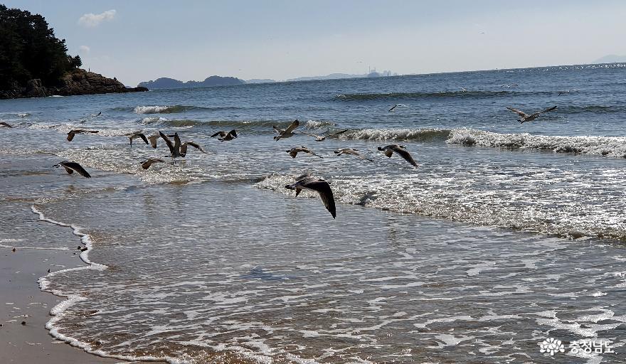 대천해수욕장 겨울바다 전경2