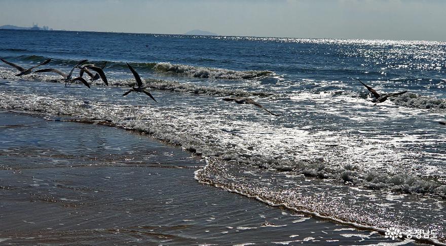 대천해수욕장의 겨울바다 갈매기 2.