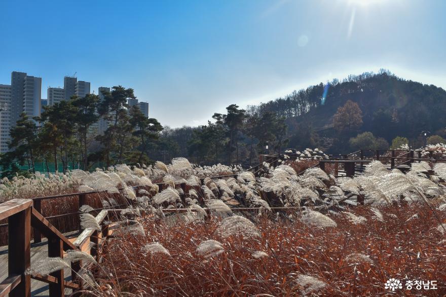 억새가 만발한 지산공원 산책, 가을과 겨울 사이