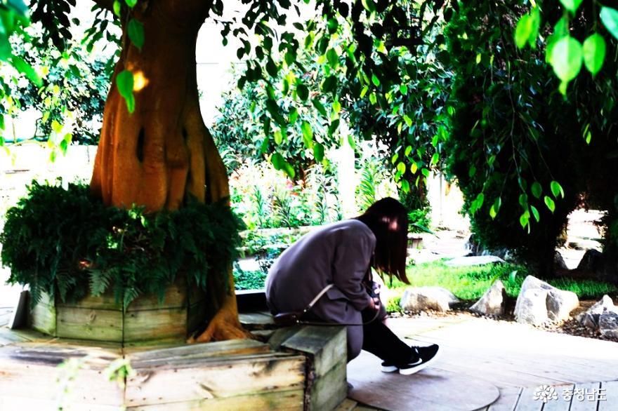 12월의 봄, 아산 세계꽃식물원 사진