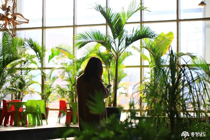 아산 세계꽃식물원, 겨울에 즐기는 가족 나들이 3