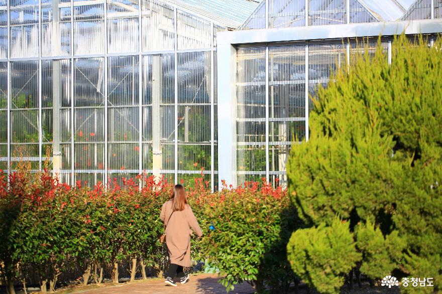 아산 세계꽃식물원, 겨울에 즐기는 가족 나들이 4