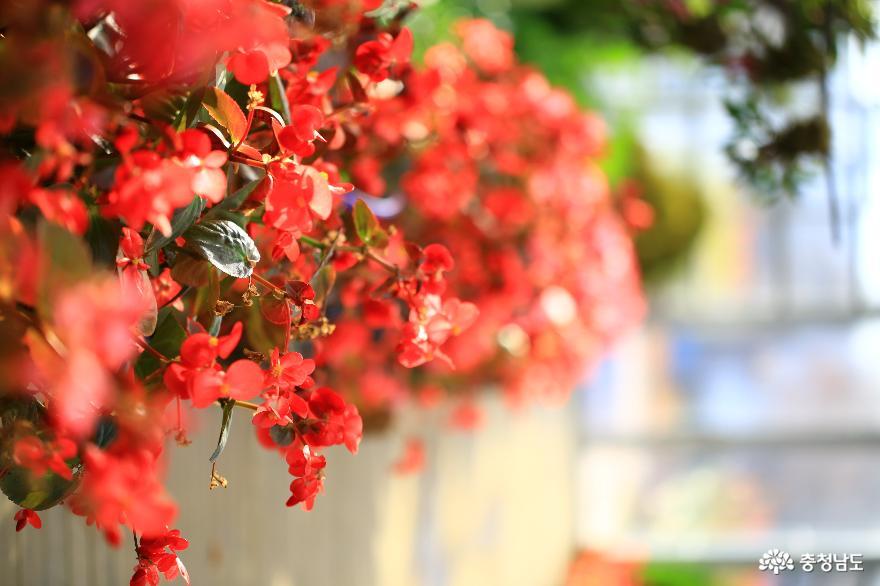 아산 세계꽃식물원, 겨울에 즐기는 가족 나들이 6