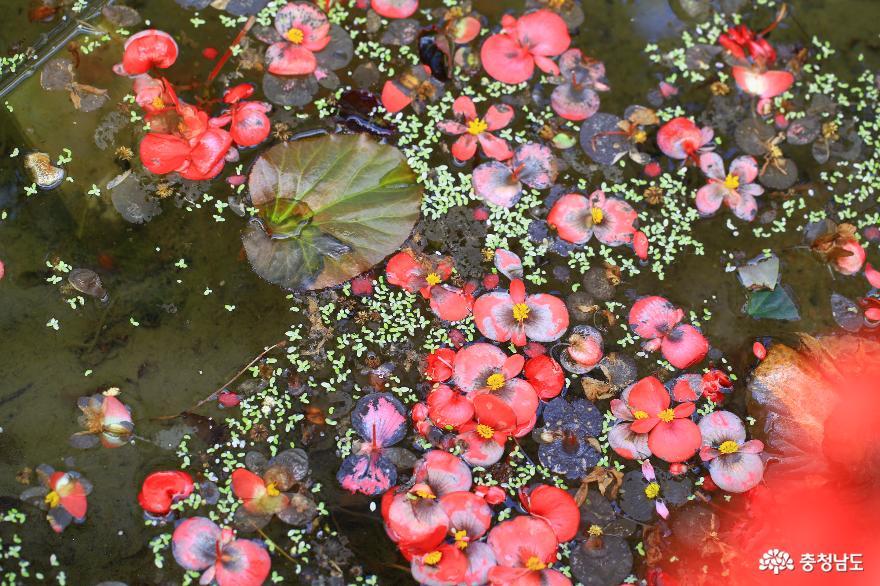 아산 세계꽃식물원, 겨울에 즐기는 가족 나들이 5