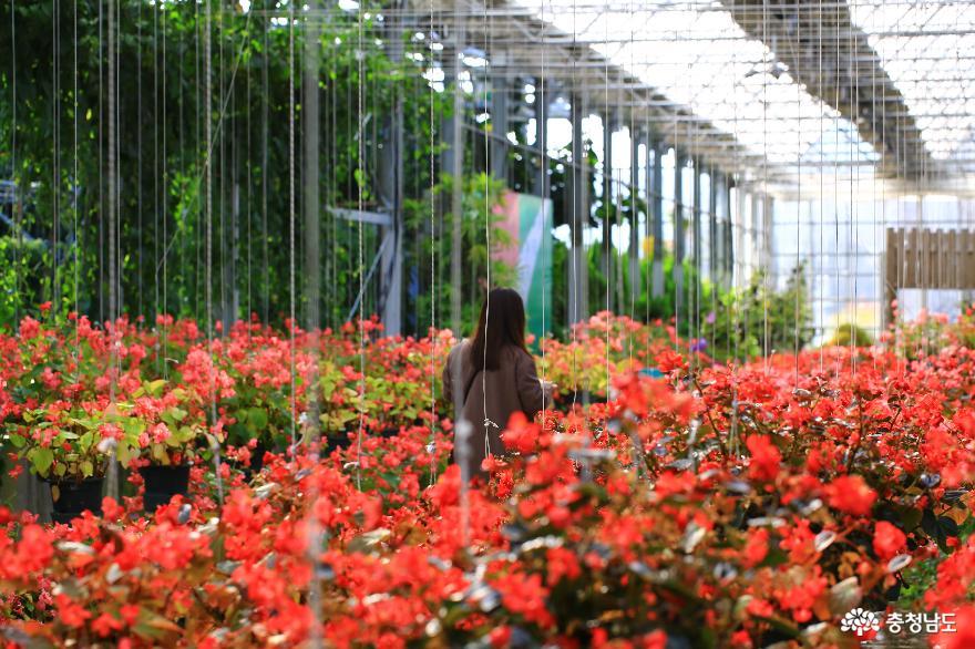 아산 세계꽃식물원, 겨울에 즐기는 가족 나들이 7