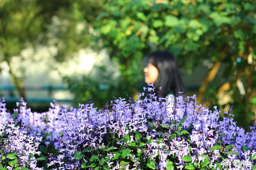 아산 세계꽃식물원, 겨울에 즐기는 가족 나들이 9