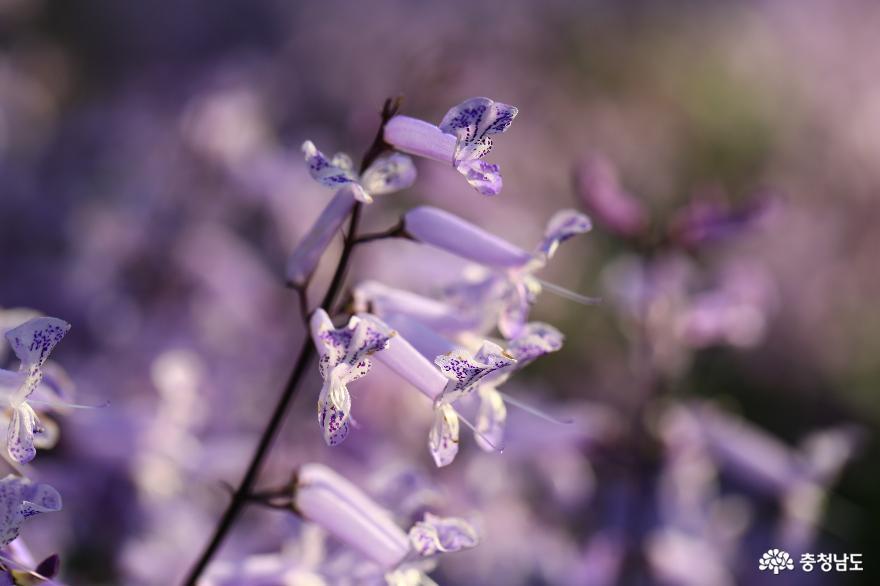아산 세계꽃식물원, 겨울에 즐기는 가족 나들이 10