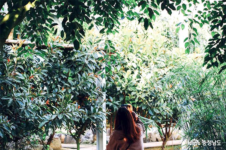 아산 세계꽃식물원, 겨울에 즐기는 가족 나들이
