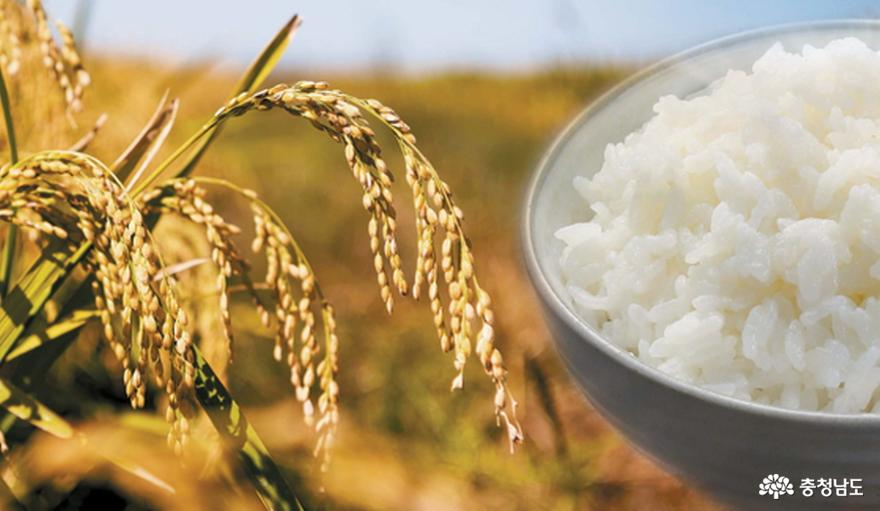 가격 제 각각인 당진쌀...소비자 혼란 부추겨