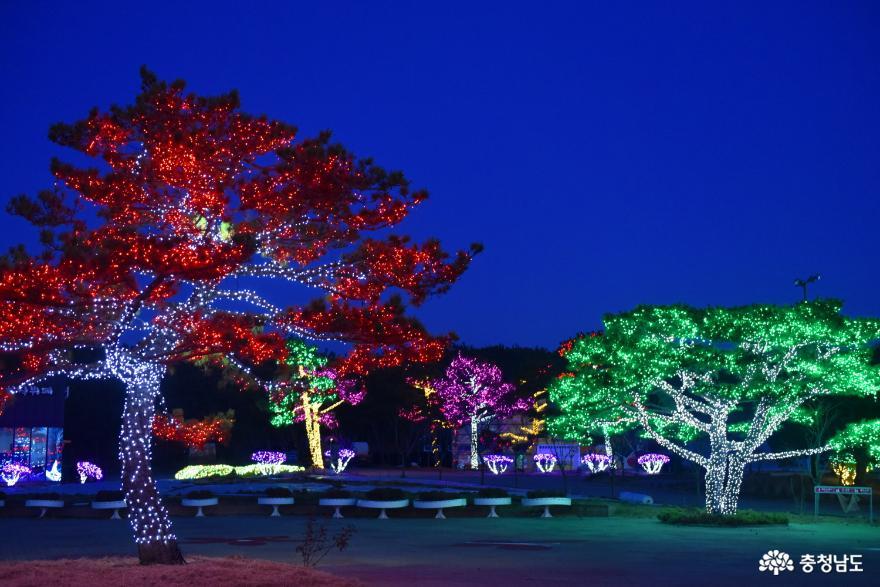 어둠을 태우는 태안 빛축제의 멋진 모습