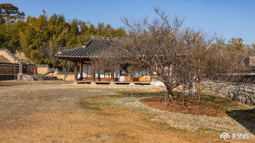 경회당 앞 뜰의 배롱나무