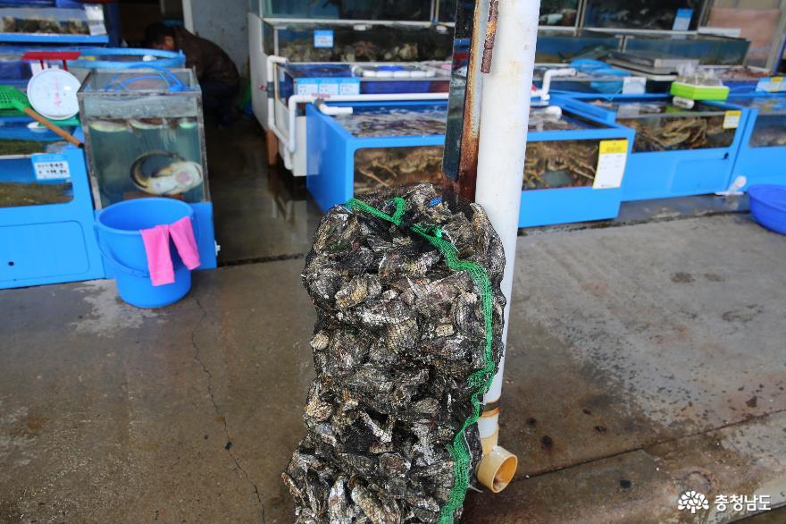 겨울철 매력이 더해지는 보령 수산시장의 물메기 2