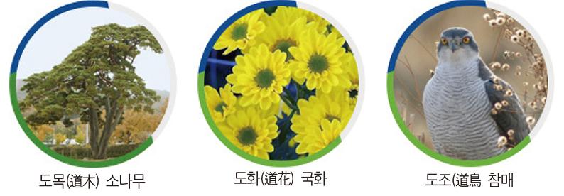 '소나무·국화·참매' 새 상징물 선정
