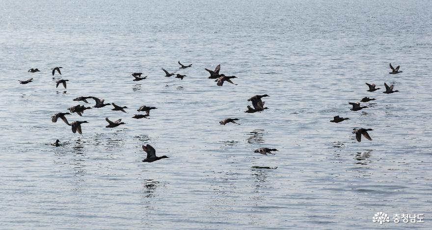 새들의 달리기 경주