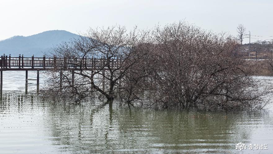 물속에서 자라는 수생나무
