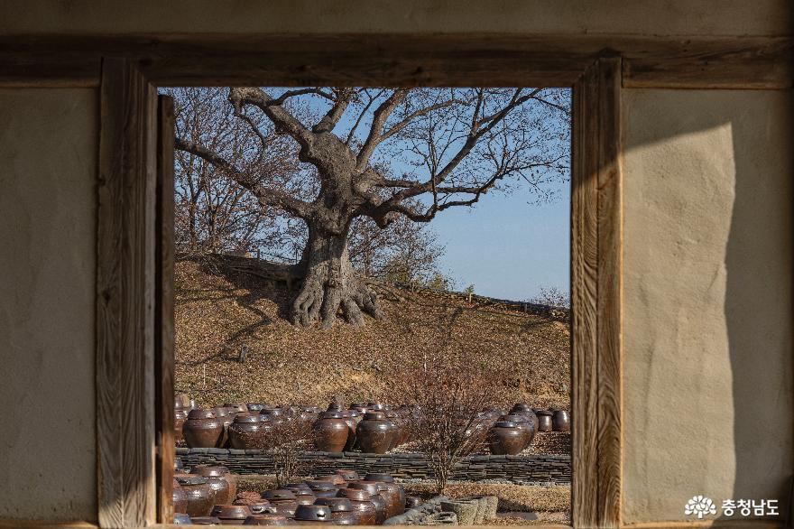 사랑채 창밖 풍경
