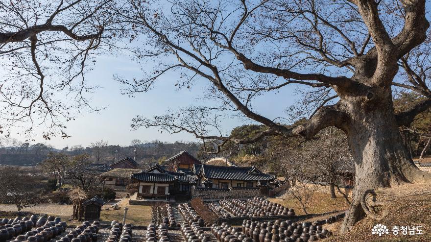 느티나무 아래 장독대가 있는 풍경