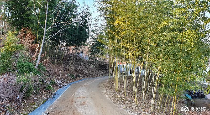 이응노 생가 주변의 대나무 숲 길.