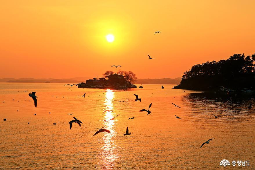 서산 일몰명소 간월암의 황금빛 일몰 7