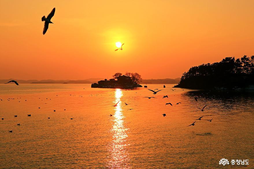 서산 일몰명소 간월암의 황금빛 일몰 8