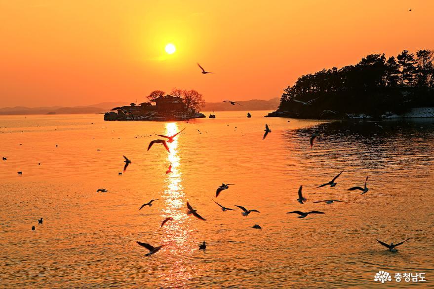 서산 일몰명소 간월암의 황금빛 일몰 9