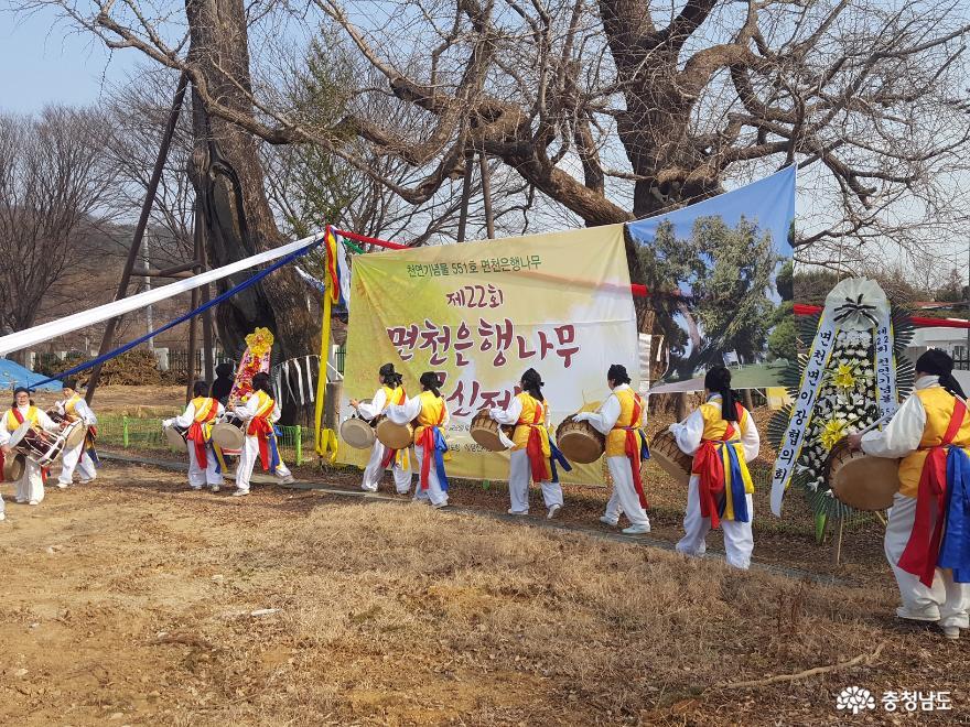 면천은행나무 목신제 개최