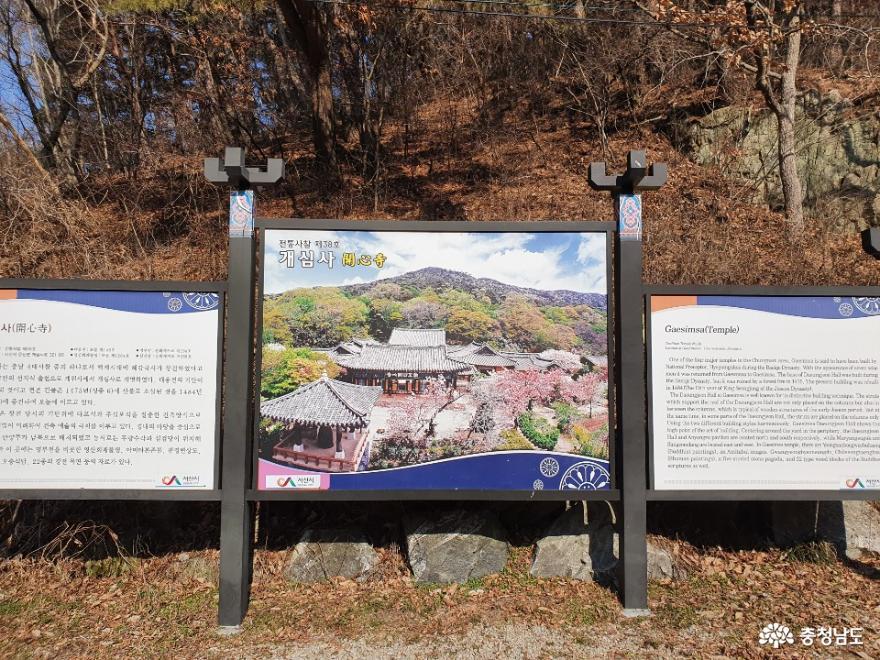 왕벚꽃으로 유명한 사찰 서산의 개심사