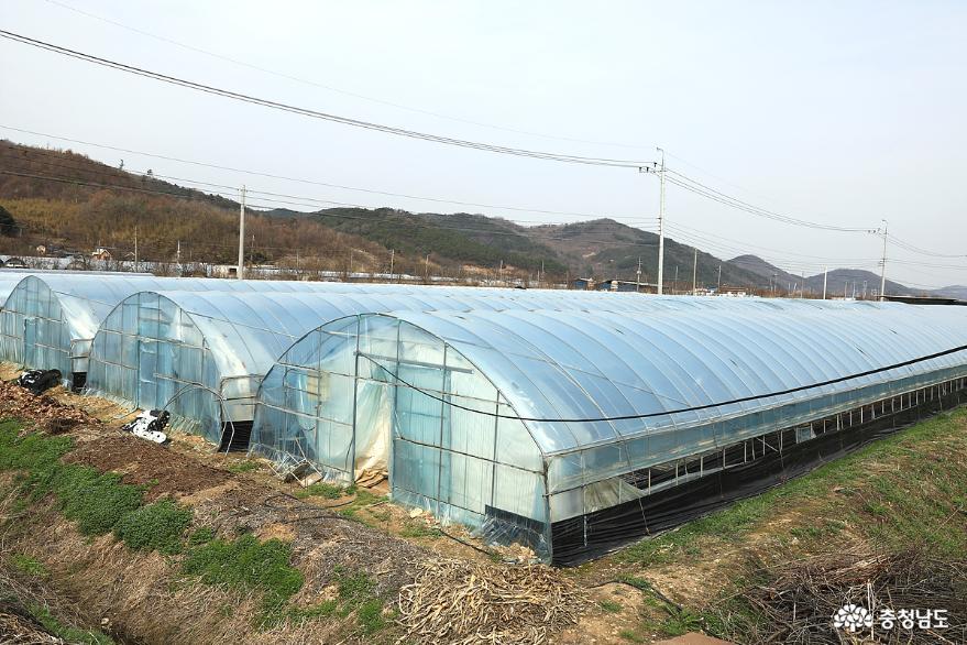 봄의 전령사, 서산 명물 '해풍맞은 달래' 1