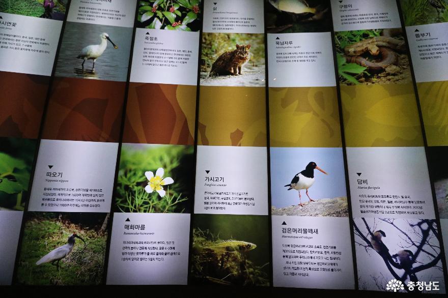 생태계의 아름다움을 체험할 수 있는 서천 국립생태원 12