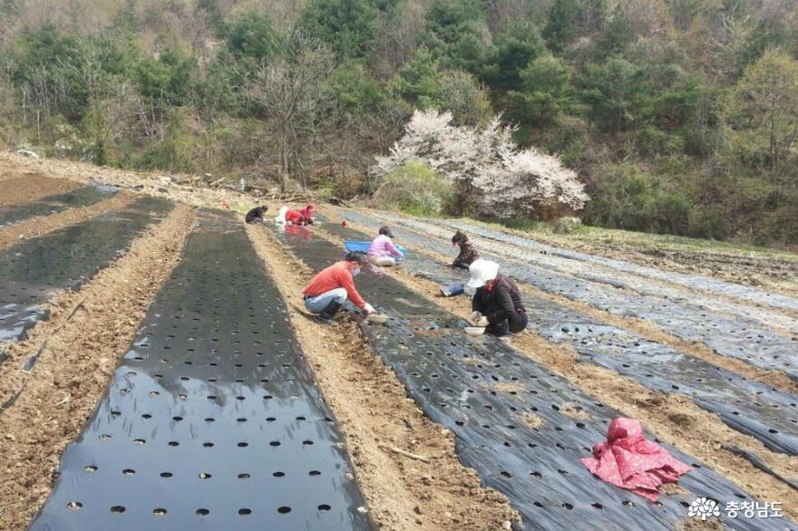 지역 주민들과 함께 성장하는 사회적기업, 아산풍성한영농조합