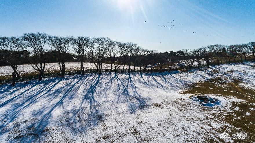 겨울의 끝, 서산목장의 '환상적인 설경' 3
