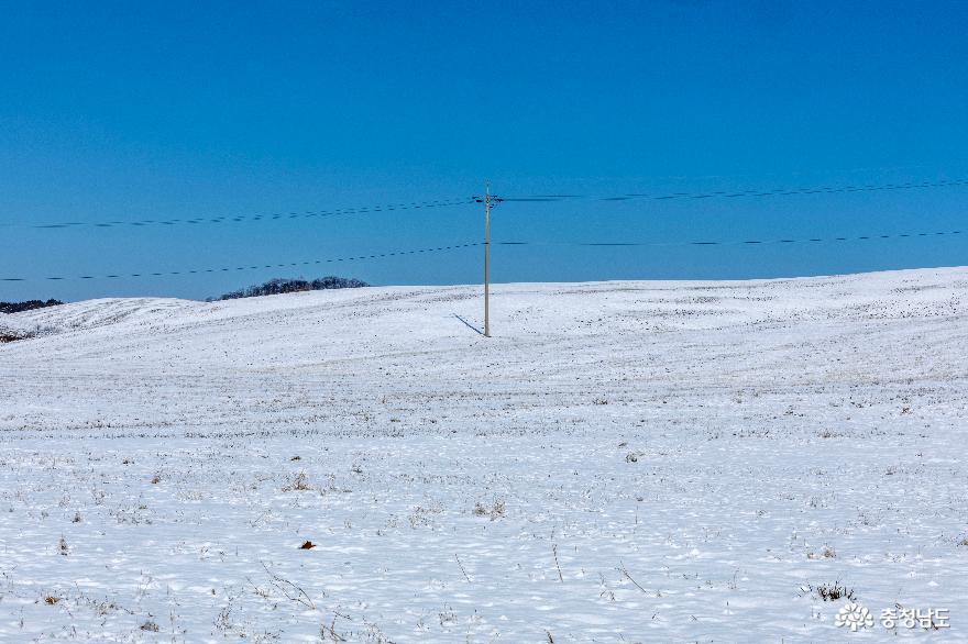 겨울의 끝, 서산목장의 '환상적인 설경' 4