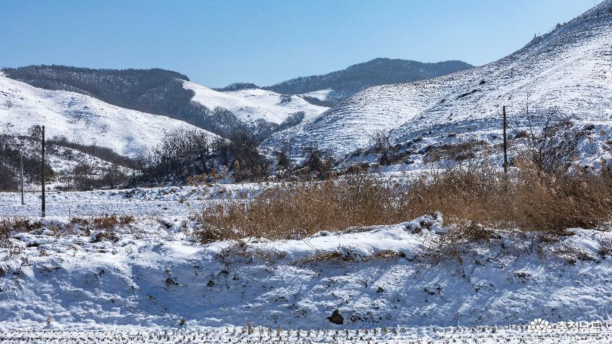 겨울의 끝, 서산목장의 '환상적인 설경' 7