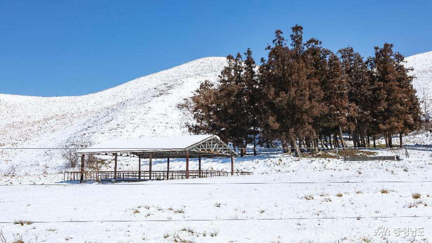 겨울의 끝, 서산목장의 '환상적인 설경' 8