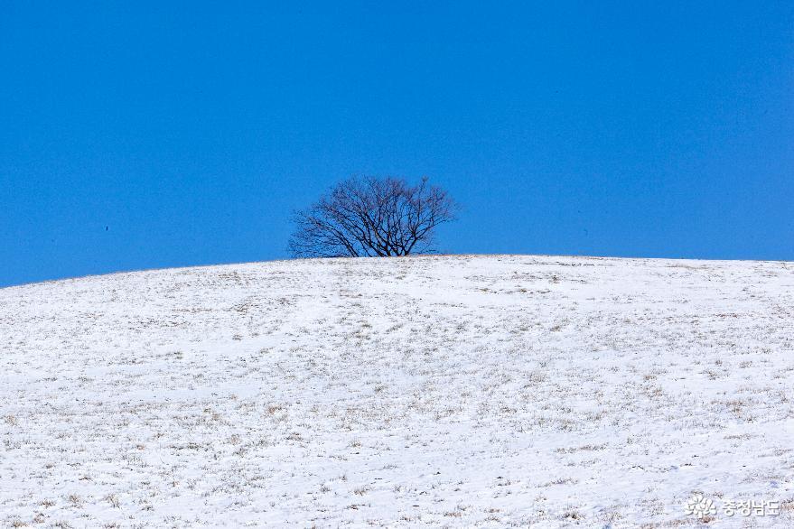 겨울의 끝, 서산목장의 '환상적인 설경' 9