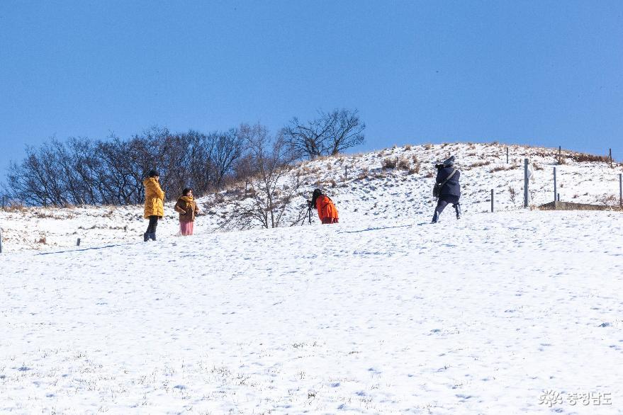 겨울의 끝, 서산목장의 '환상적인 설경' 10