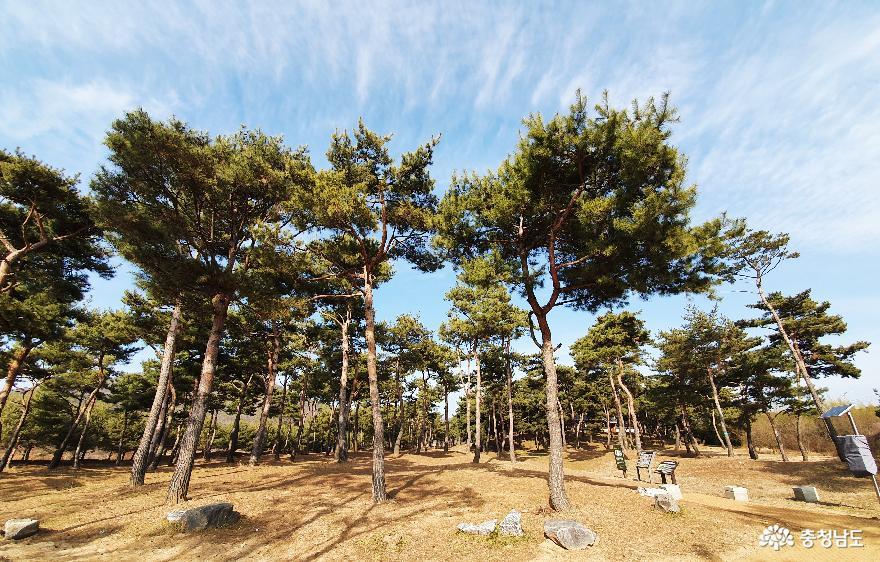 소나무숲 보며 산책하는 곳, 고마나루