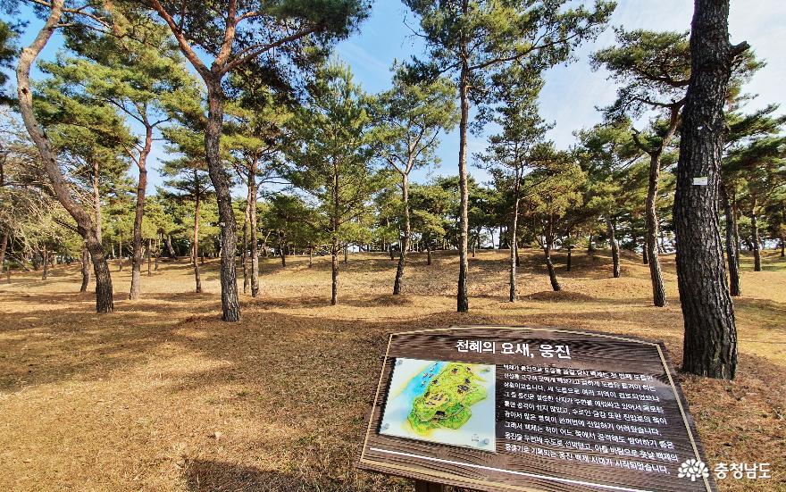 소나무숲 보며 산책하는 곳, 고마나루 4